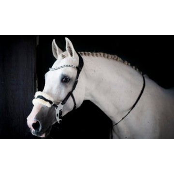 PS of Sweden Hackamore Sport Revolution suitset